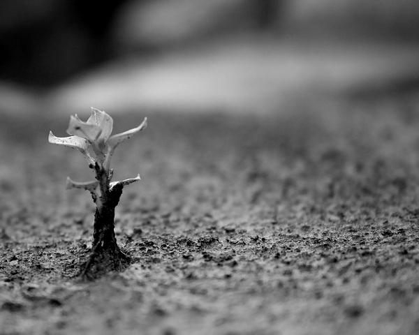 növekedni kezd