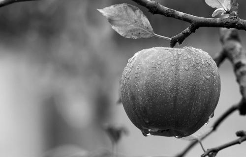 szerelem gyümölcse